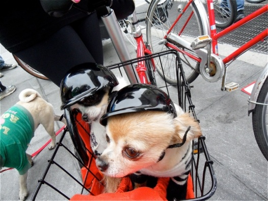 jeff prant nyc dog cycle parade